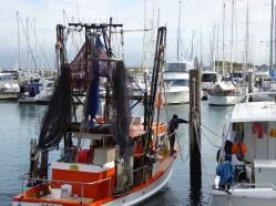 Prawn trawler edging into its mooring.