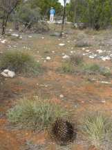 An echidna well spotted by the old geezer.